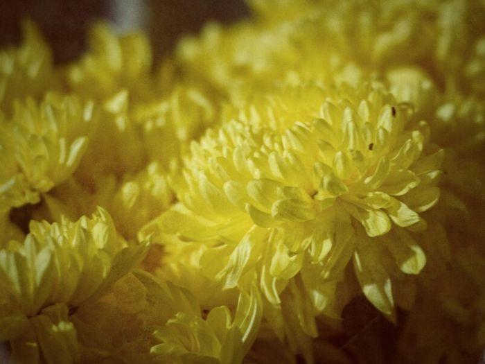 Flower Microfinance