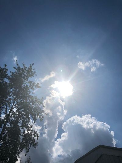 Sun shine Sky Low Angle View Sun Cloud - Sky Sunlight Tree Sunbeam Nature No People Day Beauty In Nature Sunny Blue Plant Outdoors Growth