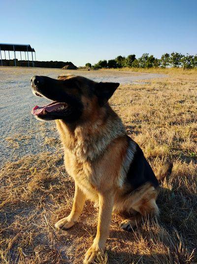 Dog Soleil Sun
