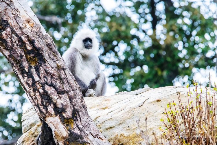 Low angle view of langur sitting on tree