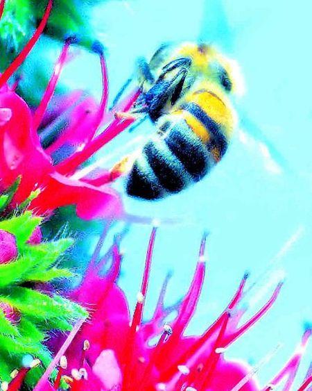 Bee bee bee How about a little pastel color =) 1) Macrongawi 2) Electric_macro 3) 9vaga_macro9 4) Bugs_are_us_ 5) Exclusive_bugs 6) Sn_may1 7) Macro_secrets 8) Bpa_macro 9) Pocket_macro 0) Hot_macros 1) Rsa_macro 2) Ptk_macro 3) Loves_united_macro 4) Macro_spotlight 5) Fotofanatics_macro_ 6) Amateurs_shot 7) Resourcemag 8) Macro_club 9) Macroworld_tr 0) Ig_myshot 1) Best_macro 2) Jj_indetail 3) Ig_closeups 4) Macro_holic 5) Macro_captures 6) ig_azhubs 7) show_us_macro 8) macroclique 9) show_us_macro 0) my_daily_macro