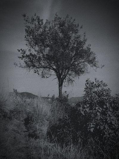 Dissolving Tree Pixelated Close-up Sky