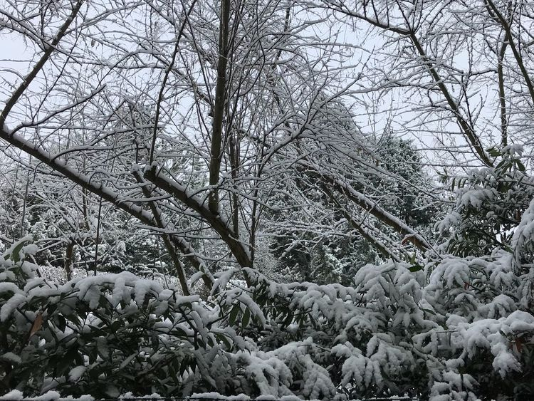 Snow Tree Bare Tree No People Tranquility Outdoors Freshness