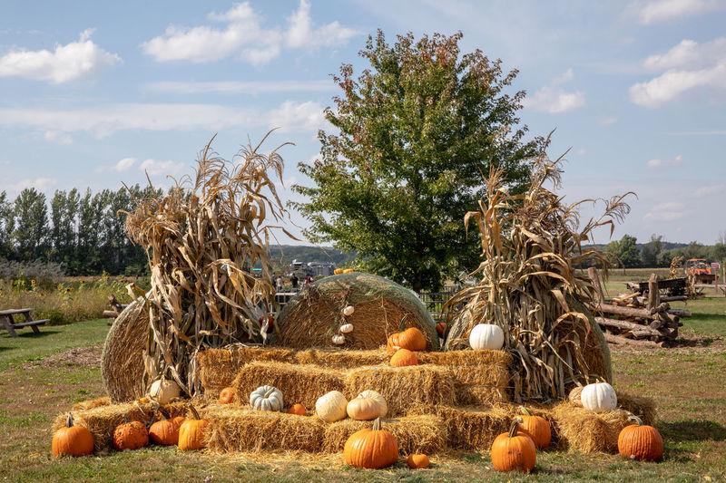 Stack of pumpkins on field against sky