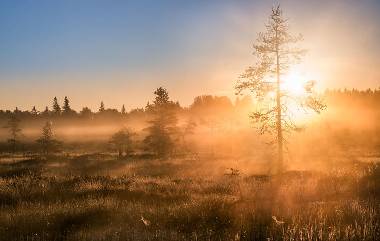 Scenic sunrise with foggy atmosphere at summer morning in Torronsuo National Park, Finland Bright Field Finland Morning Light National Park Nature Sunlight Sunrays Swamp Atmospheric Mood Fog Foggy Forest Good Morning Haze Landscape Light And Shadow Meadow Mist Orange Color Relaxation Summer Sunbeam Sunrise Yellow