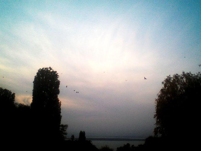 Hello World Sky Autumn🍁🍁🍁 🍁🍃🍂ツ Birds🐦⛅ Blackbirds Goodbye Sunshine First Eyeem Photo Nature ... Passion Sadness Saratov Russia