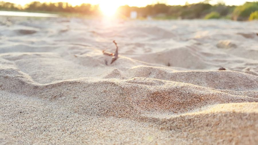 Sand Beach Nature Outdoors Day Beauty In Nature No People Scenics Landscape Water Sand Dune Close-up Landscape_photography Beach Photography Beachlife Summer Beachphotography Tranquility Nature Beachside Sweden Vacations Beauty In Nature Dof Nature Beach Sunset