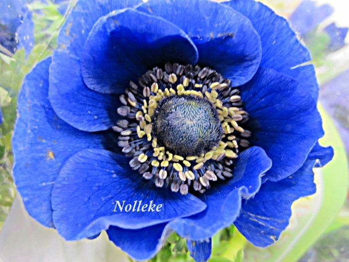 Floralperfection Flowerforfriends Flowerlove Bluetiful Eye Em Best Shots