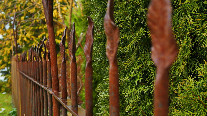 metal fence Metal Fence Barrier Beauty In Nature Boundary Close-up Day Fence Field Focus On Foreground Green Color Growth Hedge Land Metal Nature No People Outdoors Plant Protection Security Tranquility Tree