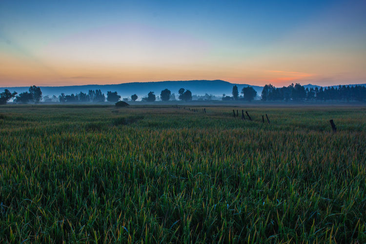 Agriculture Beauty Beauty In Nature Blue Cereal Plant Crop  Field Grass Growth Landscape Morning Mountain Nature No People Outdoors Rice - Cereal Plant Rice Paddy Rural Scene Scenics Silhouette Sky Social Issues Sunset Tourism Wheat