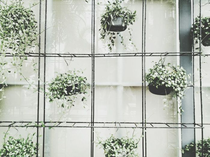Reflection Window Nature Growth Plant Indoors  Day Frosted Glass Hanging Hanging Plants Potted Plant Green Green Plant