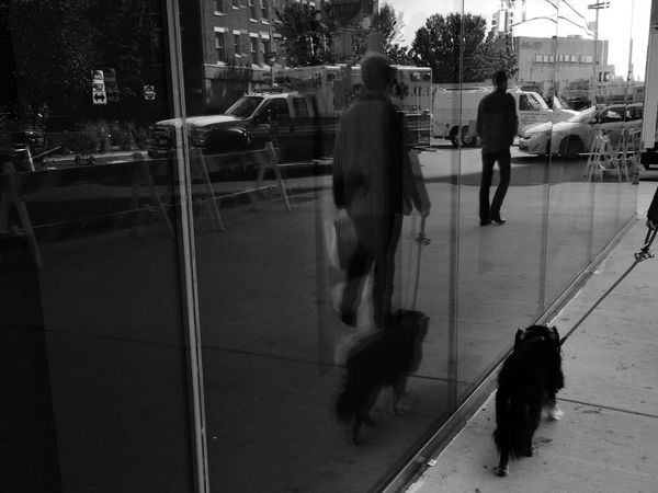 Reflection Pets One Animal Domestic Mammal People Dog