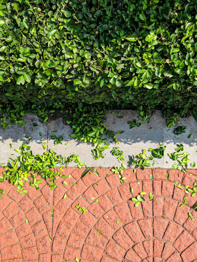 High angle view of ivy on wall