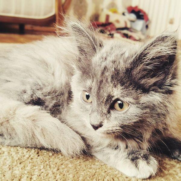 Cunning Adorable Cat