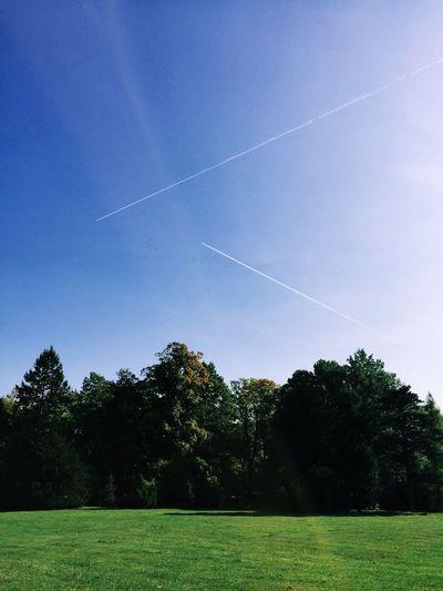 Grass Tree Landscape Grassy Sky Plane Traces Day Photos Around You Wroclaw, Poland