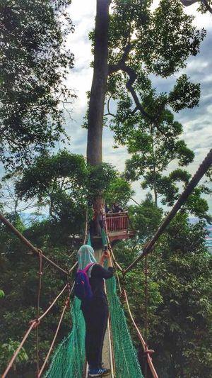 Canopy Walk #pusatsejatihutansimpanbukitgemuk #tawau Canopy Walk #bukitgemuk Tree Day One Person Outdoors Real People Leisure Activity Sky