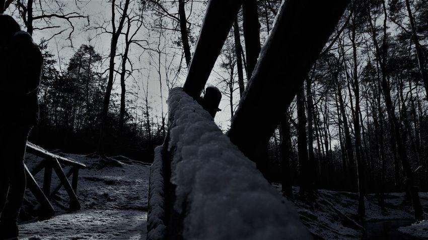 #apeldoorn #nederland #snow #sony #sonya77ii #Winter Beauty In Nature Nature Outdoors