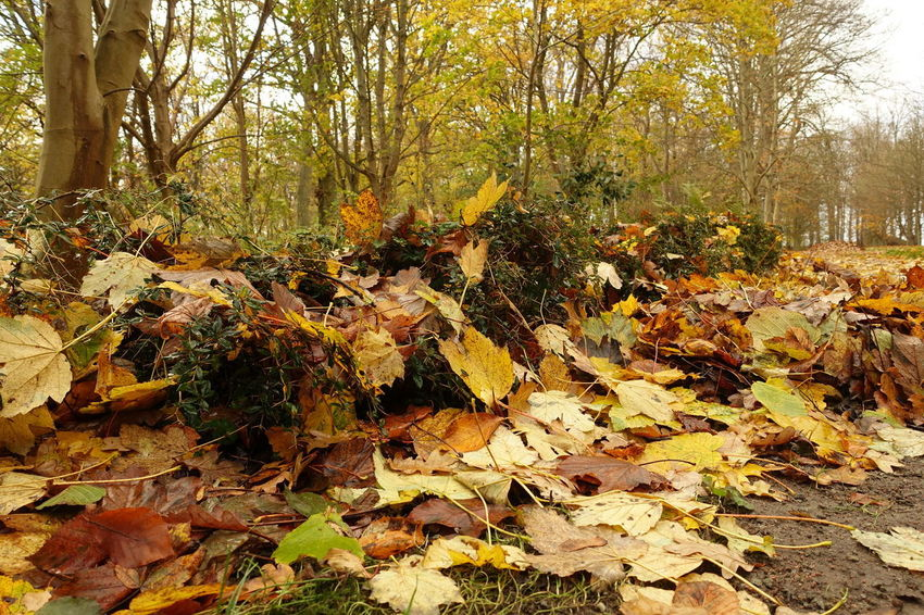 Autumn Autumn🍁🍁🍁 Beauty In Nature Coloured Leafs Day Fallen Nature Park Tree