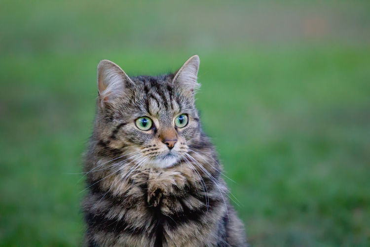 Portrait of cat on field