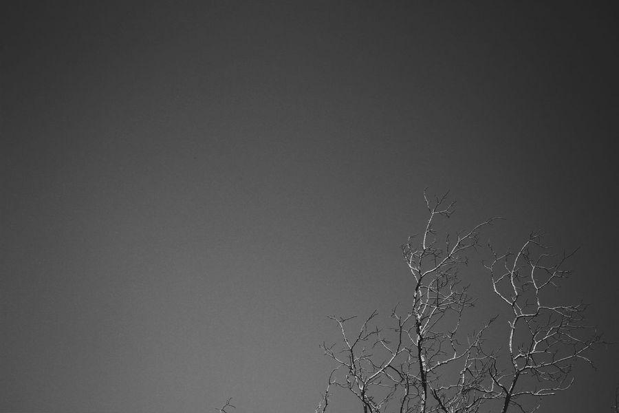Upgraded Classic. Eye4photography  EyeEm Best Shots - Black + White The Adventure Handbook WJII Photography EyeEm Best Shots Shades Of Grey Learn & Shoot: Simplicity