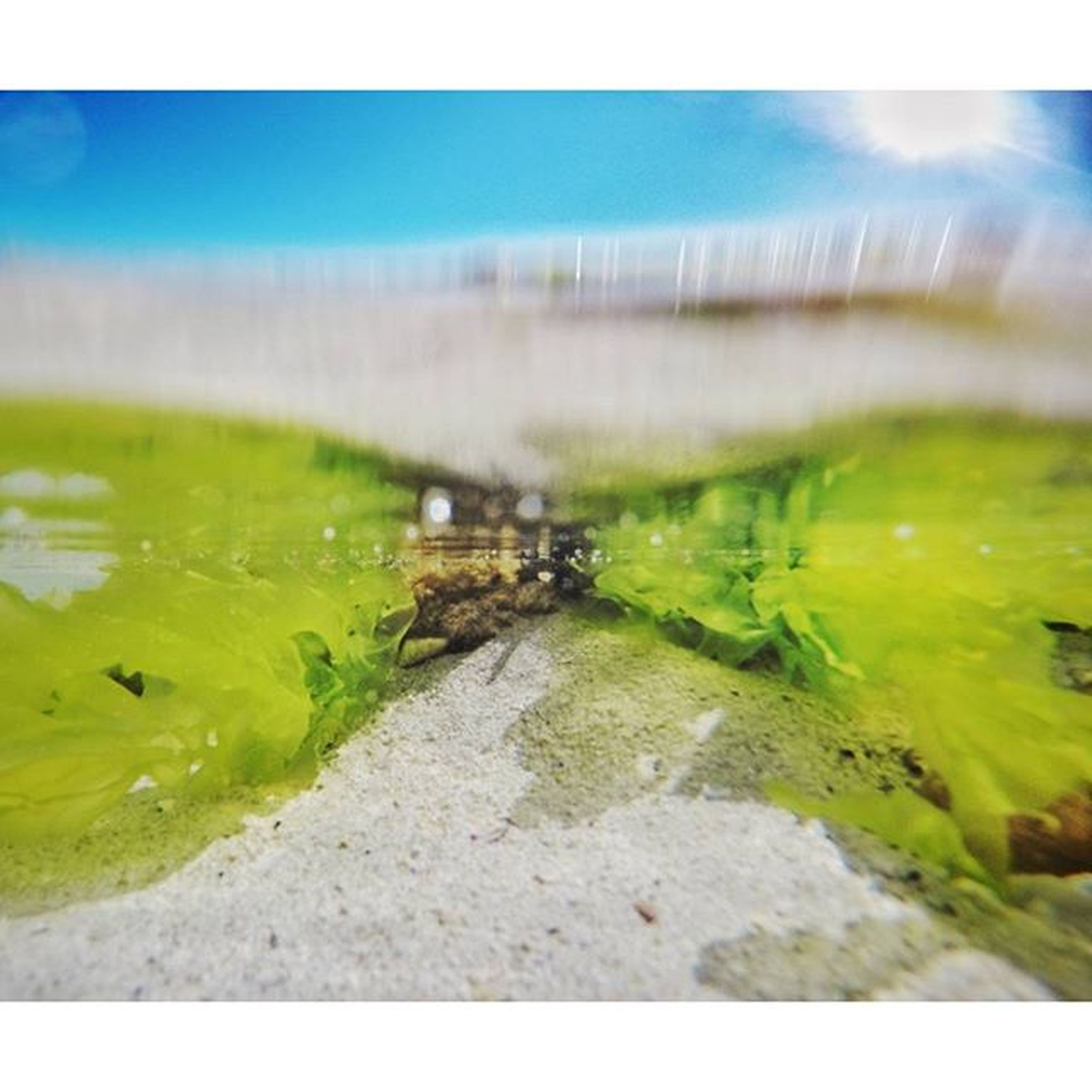 water, green color, selective focus, grass, close-up, reflection, wet, nature, pond, auto post production filter, no people, day, outdoors, surface level, transfer print, waterfront, river, motion, lake, high angle view