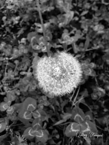 Close your eyes, make a wish... Wishes Nature Photo Black & White