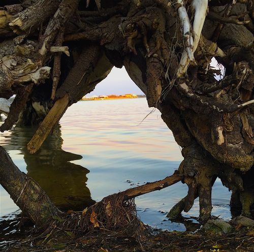 Water_collection Peeking Through Tree Trunk Reflection Sunlight Waterscape WesternAustralia