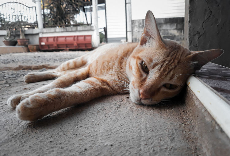 Close-up of ginger cat sleeping on footpath