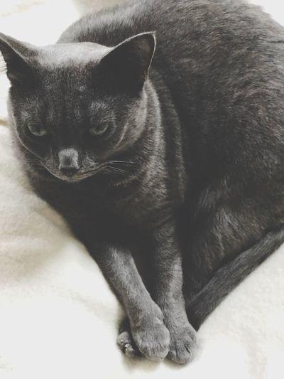 Pussycat Mammal
