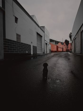 Dog Solitary Abandoned Rainy Days Thanderstorm Dog Life Telde Outdoors Day Animals In The Wild One Animal Sky Canarias Clouds And Water Animal Themes Animal Wildlife