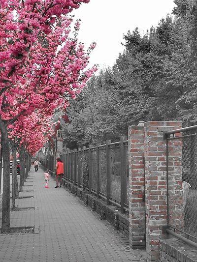 Tree Nature Growth Sky City Outdoors Beauty In Nature Pink Color Pink Flower 🌸 Between The Trees Betweentwoworlds