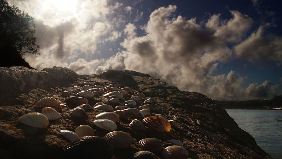 Shells on rock by sea against cloudy sky