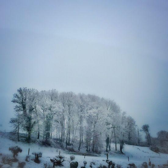 Paysage Landscape Forest Foret Hiver Winter Neige Vaud Suisse  Suisse Romande Sur La Route Road IPhone Iphonephotography