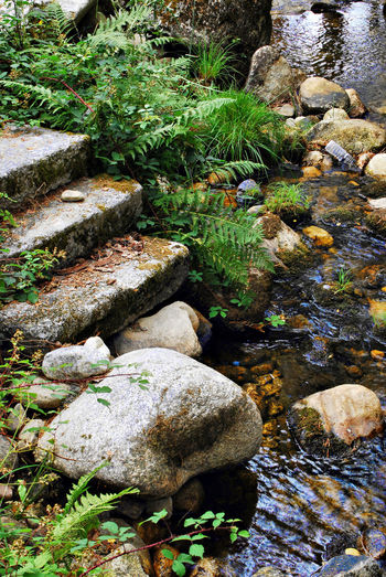 Boca Del Asno Composition Nature Beauty In Nature Color River Stones Water