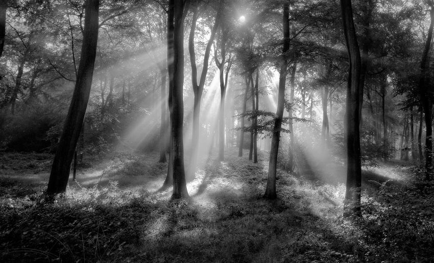Woodland morning light Morning Sunburst Sunlight WoodLand Beauty In Nature Branch Day Fog Forest Forest Photography Growth Landscape Nature No People Outdoors Rays Scenics Sunbeam Tranquil Scene Tree Tree Trunk WoodLand Woods