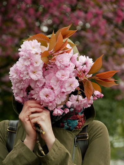 Close-Up Of Woman Holding Pink Flowers Over Face