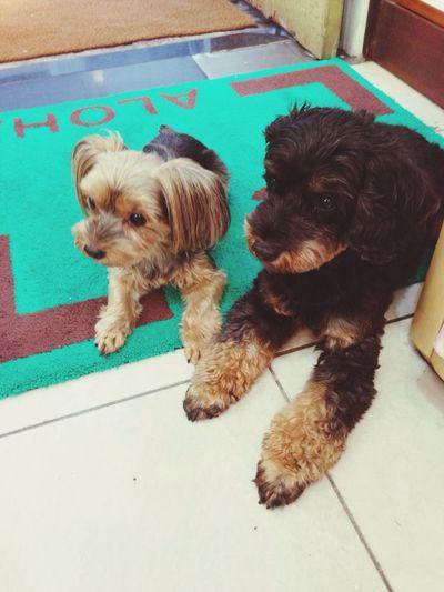 best friend♡ Pupu♡