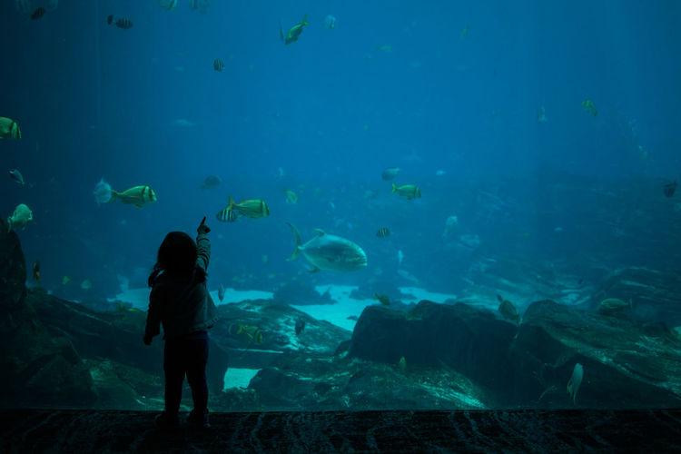 Rear view of woman swimming in aquarium
