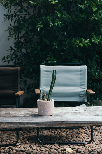 Camping ground with cactus vase table and folding chair