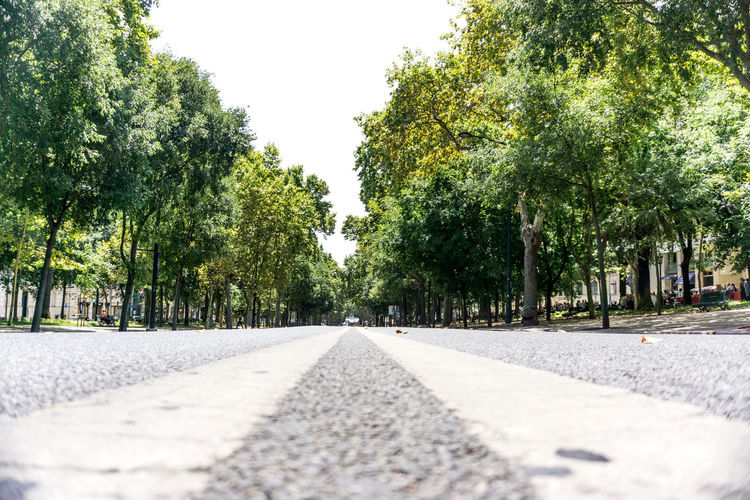 Road amidst trees and plants in city