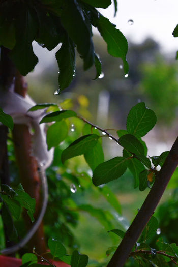 Dancing Drops Beauty In Nature Branch Close-up Clouds Day Drop Freshness Green Color Growth Holidays House Leaf Macro Nature Nature No People Outdoors Plant Rain RainDrop Tree Vacation Vacations Water Wet