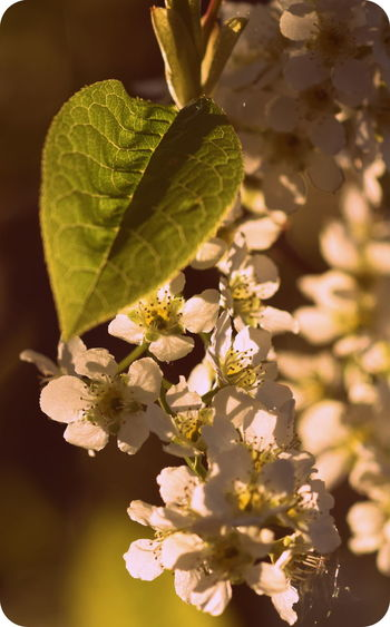 Beauty In Nature Close-up Day Flower Flower Head Focus On Foreground Fragility Freshness In Bloom Leaf Nature Plant