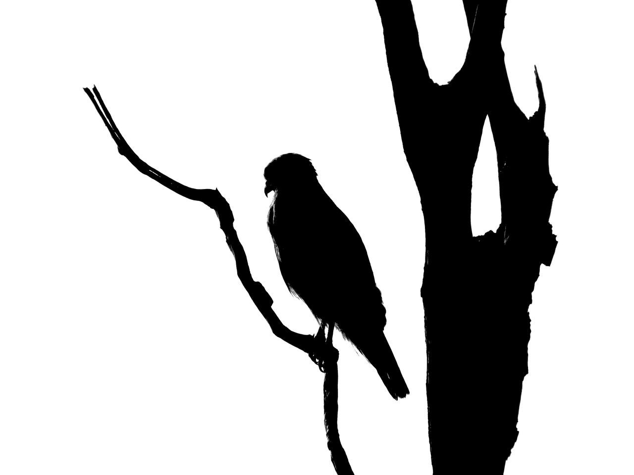 bird, animal themes, silhouette, animals in the wild, one animal, animal wildlife, perching, low angle view, raven - bird, crow, no people, full length, clear sky, nature, day, outdoors