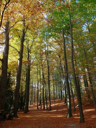 Fall Fall Beauty Nature Hello World Taking Photos Relaxing Hanging Out Hi! Enjoying Life Check This Out Fall_collection Enjoying The View Enjoying The Sun Enjoying Nature Sun Trees