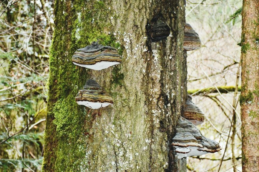 Mushrooms 🍄🍄 Dosh Nature Photography