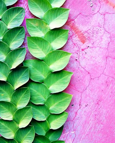Wall Photography EyeEm EyeEm Nature Lover Nature Nature Photography Pink Color Pink Wall EyeEm Best Shots Nature_collection EyeEmNewHere Plant Botanical Garden Photography Garden Leaf Backgrounds Textured  Close-up Green Color Plant Life Plant Part Botanical Garden Botany