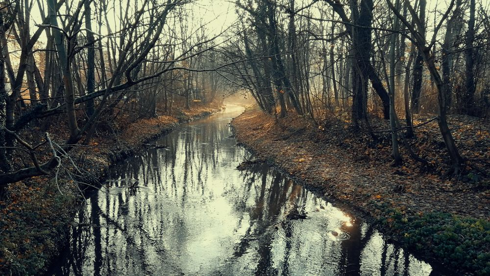 A small River across a Landscape Leipzig Rosental Gohlis River Landscape Outdoors Autumn Winter Cold Temperature Bizarre Nature Bare Tree Reflection Water Mystic Atmosphere Light And Shadow Bright Contrast Germany Tranquil Scene Beauty In Nature Tree Water Forest Silhouette Sky Cold Foggy Weather