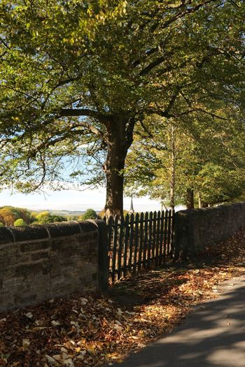 Autumn colors South Yorkshire Autumn Barrier Boundary Cemetery Change Day Fence Footpath Grave Growth In A Row Land Nature No People Outdoors Plant Shadow Sunlight Tranquil Scene Tranquility Tree Treelined Wentworth