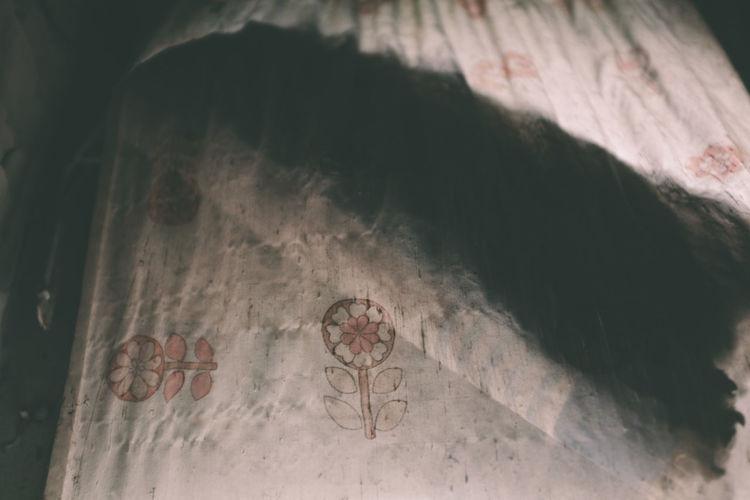 High angle view of animal on wall