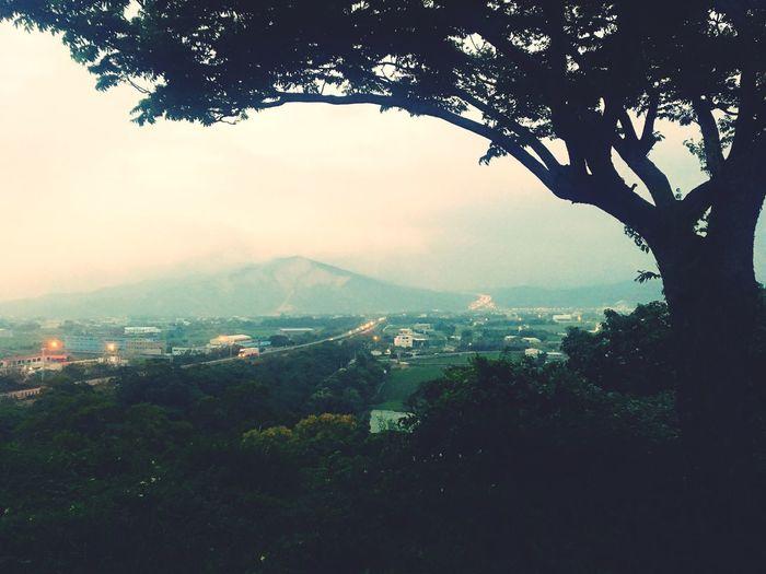 Taiwan Tree Sky